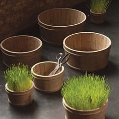 traditional indoor pots and planters by Mothology