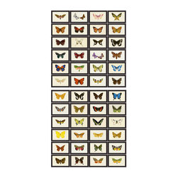 Hubbard Butterflies - Set of 120 Framed Prints - Long a symbol of ephemeral beauty, the butterfly entrances with a delicacy seen but seldom felt. The complete set of Hubbard Butterflies features 120 different butterfly images each exquisitely rendered on a soft neutral background, allowing for a most vivid presentation of the brightly colored butterfly wings. The individually framed pieces may be hung singly to accommodate smaller spaces, or displayed in subsets or one large collection for a more dramatic impression.