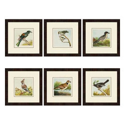 Paragon Art - Paragon Birds ,Set of 6- Artwork - Birds ,Set of 6                ,  Paragon Double Mats Protected Under Glass , Paragon has some of the finest designers in the home accessory industry. From industry veterans with an intimate knowledge of design, to new talent with an eye for the cutting edge, Paragon is poised to elevate wall decor to a new level of style.