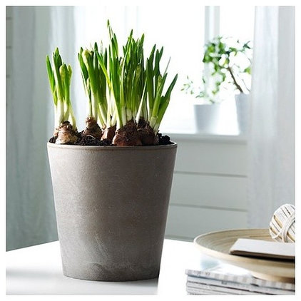 contemporary indoor pots and planters by Splendid Willow