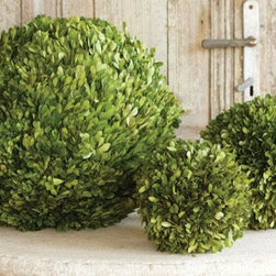Home Decorators Collection - Preserved Boxwood Ball - Preserved boxwood balls are a great addition to any shelf. They provide the look of a real live plant without the upkeep or need for sunlight. If you have a brown thumb like I do, these are great.