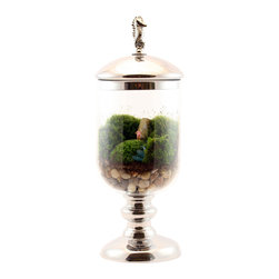 Twig Terrariums - Rolling on a River - This little swimmer dude is ready to perfect his backstroke in what may very well be the world's shortest river (it's made of fine beach glass). A piece of petrified wood and abundant green moss make up the rest of this glass contained terrain. While he might lack practice space, he does have one advantage, the water's always room temperature.  Figures may vary, but we promise they're all adorable.