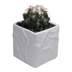 "MODgreen - Coryphantha e. - 4"" Ceramic Potted Cactus and Succulents - Commonly known as ""Elephant Tooth"" this compact globular cactus is native to Mexico. Water once a month and place under bright light. With this design MODgreen has put a new twist to the standard ceramic cube planter by giving them a corrugated texture that make these beautiful pots stand out above the rest."