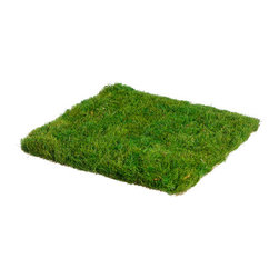 Silk Plants Direct - Silk Plants Direct Preserved Grass Mat (Pack of 12) - Silk Plants Direct specializes in manufacturing, design and supply of the most life-like, premium quality artificial plants, trees, flowers, arrangements, topiaries and containers for home, office and commercial use. Our Preserved Grass Mat includes the following: