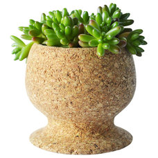 Modern Indoor Pots And Planters by Melanie Abrantes Designs
