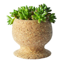 Melanie Abrantes Designs - Cork Cup Planter - Hand-turned cork planter cup designed for desert plants such as succulents and cacti. Cork is naturally porous making it an ideal material for plants. Each planter has a shellacked interior and finished on the outside with a natural beeswax and orange oil bring out the natural beauty of the cork.