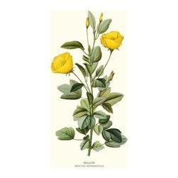 Mallow Flower Botanical Print - 8x10 Print - Vintage style botanical flower art print from turn of the 19th century illustrations.