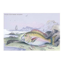 """Buyenlarge.com, Inc. - Four Toothed Spaces - Gallery Wrapped Canvas Art 28"""" x 42"""" - Lithographs of British fish done for Sir William Jardine and his naturalist library publications."""