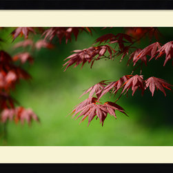 Amanti Art - Japanese Garden Framed Print by Andy Magee - Red leaves stand out against a lush green background; Japanese Maple trees symbolize peace and grace in Asian culture. Display some serenity on your wall.