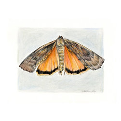 """""""Large Yellow Underwing Moth"""" Artwork - Natural history original drawing of a moth - either a Large or Lesser Yellow Underwing moth, a beautiful, small flying insect found in the woods. I love how it's wings resemble bark and dry leaves but then there's the surprise of the bright underwings. A native to Eurasia whose range now includes most of North America.  This is a signed original mixed media drawing by Washington state artist Kathleen Ney. Contemporary art with old world qualities of craftsmanship, care and time. A detailed and skillfully rendered art piece for your home decor, these would be wonderful in a grouping!  The paper size is 8.5"""" x 11"""", the image size is appx. 6.25"""" x 8"""" on 110 lb smooth crisp white paper made for detailed art. Will be shipped in 11""""x14"""" mat and cello bag, ready to frame or give as a gift!   Please note: Colors may vary slightly due to photography and difference in monitors.  The copyright watermark shown here is not a part of the original art or prints. Sale of original art does not transfer reproduction rights."""