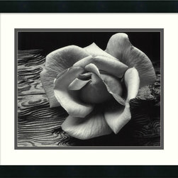 """Amanti Art - """"Rose and Driftwood, San Francisco, California, 1932"""" Framed Print by Ansel Adam - A rose is not always a rose. Sometimes it's a profound statement of simplicity and grace. This stunning print is framed using gallery-quality acrylic glazing to keep your rose fresh."""