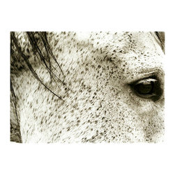 The Hyden Horse (Tribute) - Framed Print - Taken closely enough to be nearly abstracted, but still recognizably filling the traditional niche of the equine portrait, The Hyden Horse Tribute is an intimate photographic print that emphasizes texture over form. Soft patterns and crisp shadows are awe-inspiring in the right light; the size of this wall art piece is dramatic, and only enhanced by the width of the dark wood frame.