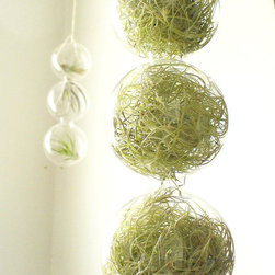 Spring Green 3 Globes Filled With Airplants by SASSY spaces - Air plants are low maintenance, people. I love how they're whimsically tucked inside these clear glass globes. This is such a conversation piece.