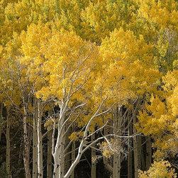 Magic Murals - Autumn Golden Leaves Wallpaper Wall Mural - Self-Adhesive - Multiple Sizes - Mag - Autumn Golden Leaves Wall Mural