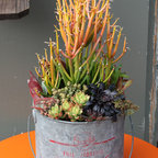 Chicweed - A container garden of succulents I saw for sale at Chicweed, a mother-daughter floral design shop in Solana Beach, CA, that specializes in succulents. Photo credit: Debra Lee Baldwin