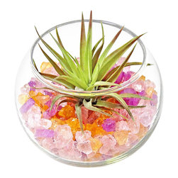 """luludi living frames - Luludi Living Frames Jujubee - Our jujubee terrarium looks as sweet as a bowl full of candy but with all the healthful benefits of a living plant. A whimsical treat for you or a friend, our jujubee comes with an air plant nestled atop colorful stones in our soirees bowl, dimensions: 3"""" diameter, weight (approx): 12 oz, terrariums are unique landscapes so finished pieces may vary, Suggestion for care:, no direct sun required, mist once per week remove air plant first, mist and allow to dry before replacing in terrarium, upon receipt soak air plant in bowl of water for 30 minutes, allow to dry then place plant in terrarium, soirees terrariums are living compliments to any event as table setting decor, unique name card holders and as party gifts. Consider customizing your soirees with any color sand/stone, plant and decorative element just email or call us to discuss your design ideas"""