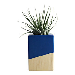 Cobalt + Wood Air Plant Planter (with air plant) - Natural wood and striking cobalt colorblock air plant cube. This handmade cube will arrive with a tillandsia houston. Simple and modern. Care instructions included.