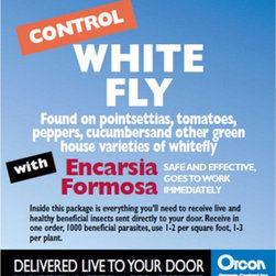 Orcon - Orcon White Fly Control with Encarsia Formosa Eggs - EF-C1000 - Shop for Pest Control from Hayneedle.com! About Organic ControlFor 35 years Organic Control has been working as a friend of gardeners everywhere creating environmentally friendly methods of pest control. With a clear understanding of which bugs can help and which can hurt the growth of a producing plants Organic Control has expanded to product lines that repel not only insects but also mammals to help improve blooms and increase the yield on fruits nuts and vegetables. The award-winning team at Organic Control designs easy-to-use repellents that are long-lasting and effective.