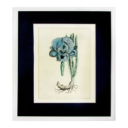 Consigned Blue Iris Etching in White Lacquer Frame - Hand-tinted etching titled Large Blue Iris II and numbered 33/750. Displayed in custom white lacquer wood frame and fancy double mat.
