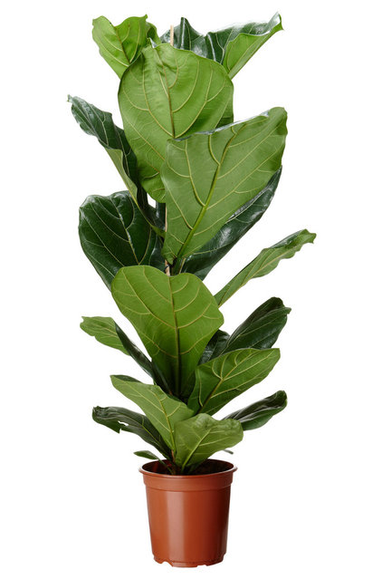 Traditional Plants by IKEA
