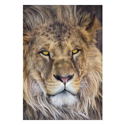 """Lion Wall Mural Wall Mural - Add a touch of wildlife to your decor with this peel and stick panel featuring a stoic lion of majestic grandeur. This safari inspired mural captures the serene brilliance of the wild bringing into your home a wonderful masterpiece of beauty. This wall panel stands at 4'2"""" x 6'."""
