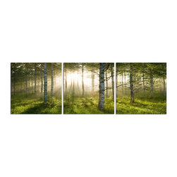 Elementem - Enchanted Forest Print - This frameless photograph of a sunrise trees peeking through the trees of a forest  is printed on vinyl and mounted on a wooden MDF frame.   We laminate over each of our photos to allow them to be easily cleaned and protected.  Packed with wall hangers, they are easy to install.