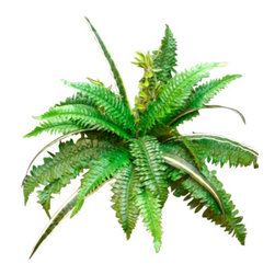 Silk Plants Direct - Silk Plants Direct Boston Fern and Spider Plant Bush (Pack of 12) - Pack of 12. Silk Plants Direct specializes in manufacturing, design and supply of the most life-like, premium quality artificial plants, trees, flowers, arrangements, topiaries and containers for home, office and commercial use. Our Boston Fern and Spider Plant Bush includes the following: