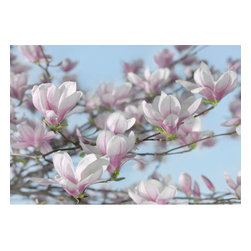 Magnolia Wall Mural - The delicate beauty of the magnolia is showcased in this exquisite wall mural.