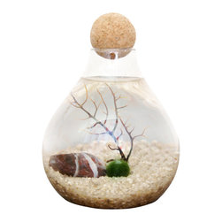 "Moss + Twig - Marimo Moss Ball Terrarium - This Marimo moss ball ecosystem contains sand, sea fan, and stones in a corked glass globe. Glass terrarium is 4"" wide and 4"" tall and comes with round cork stopper. Shipped in an easy to assemble kit, just add tap water."