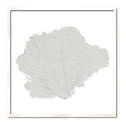 Kathy Kuo Home - Avalon Large Coastal Beach White Sea Fan Wall Decor - by Karen Robertson - Your fan club has arrived. Not everyone has fans as well mannered, diverse and interesting as this. And you, with your penchant for uniquely beautiful wall decor, deserve all the fanfare you receive.