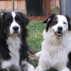 Animal Houzz: Living With (and Loving) Those Messy Pets of Ours