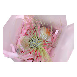 Air Plant Company - AirPlants-50 Air Plants Cute Airplants for Weddings, Baby Showers and Gift Bags - AirPlants-50 Air Plants Cute Airplants for Weddings, Baby Showers and Gift Bags