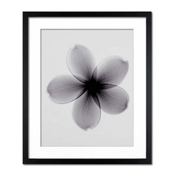 Photos.com by Getty Images - X-Ray Plumeria Flower - X-ray image of a plumeria flower. Black and white photograph with matte black frame.