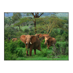 Vibrant Canvas Prints - Canvas Art Prints, Framed Huge Canvas Print 5 Panel Stream Nature - This is a beautiful, 100% quality cotton canvas print. This print is perfect for any home or office, and will make any room shine with its addition of color and beauty.  - Modern Home and Office Interior Decor   Elephant Canvas Designs - 1 Panel Print   Elephant Wildlife Print on Canvas - Wall Art - 30 Day Money Back Guarantee.