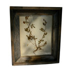 """Pressed Botanical #1 - Herbarium or botanical pressing framed in vintage barn wood.  This pressing dates from the 1920s and is beautiful, with graceful stems and flowers still showing some color. Can be hung either vertical or horizontal 11""""by 13"""" overall framed."""