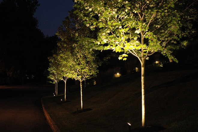 Landscape Lighting Book : Trees light up the night with these landscape lighting