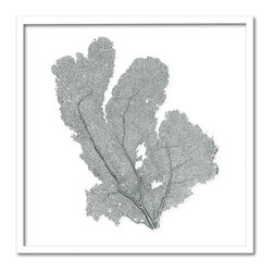 Kathy Kuo Home - Avalon Small Coastal Beach Gray Sea Fan Wall Decor - by Karen Robertson - Your fan club has arrived. Not everyone has fans as well mannered, diverse and interesting as this. And you, with your penchant for uniquely beautiful wall decor, deserve all the fanfare you receive.