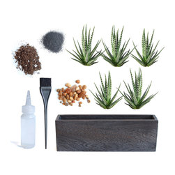 LushModern - Zebra Cactus in Kiri Wood Planter - This cool, cactus-garden-in-a-box gives you a piece of the wild outdoors in one neat, modern package. Five striking, stripe-printed zebra cacti fit tidily into a rustic, kiri wood box that can fit on your windowsill or desk. Your kit includes potting soil, black sand and a small bag of gravel, plus a water bottle and finishing brush for a perfectly manicured presentation.