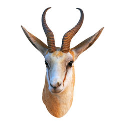 Walls Need Love - Cute Antelope Mount Decal - Native to Africa and Eurasia, this adhesive taxidermy animal is super cute! Bring a little Animal Planet energy into your den, rec room, garage or office. This antelope will spark many a conversation about your virtual safari experience.