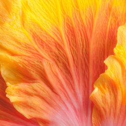 """Douglas Page Photographic Arts - Flower Flames - Metallic Canvas Giclee, 24"""" X 16"""" - This fine art color photograph on metallic canvas, by photographic artist Douglas Page, captures the vibrant beauty of a yellow-orange hibiscus flower in Hawaii."""