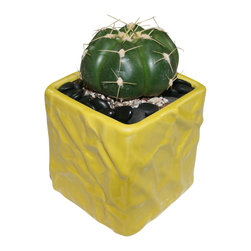 "MODgreen - Gymnocalycium h. - 4"" Ceramic Potted Cactus and Succulents - G. horstii also know as 'The 'Spider Cactus' comes from a region among Brazil, Paraguay and Argentina. Water once a month and place under bright light. With this design MODgreen has put a new twist to the standard ceramic cube planter by giving them a corrugated texture that make these beautiful pots stand out above the rest."