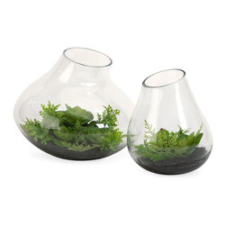 Gaudet Succulents - Set of 2 - Emulating modern day terrariums, this set of two Gaudet succulents fill open ended glass containers to add an organic freshness to any home. Stack on a set of book boxes to add depth to end tables or bookshelves.