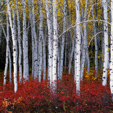 Traditional Artwork by Howard Fine Art Nature Images
