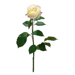 Silk Plants Direct - Silk Plants Direct Large Rose Bud (Pack of 12) - Cream - Pack of 12. Silk Plants Direct specializes in manufacturing, design and supply of the most life-like, premium quality artificial plants, trees, flowers, arrangements, topiaries and containers for home, office and commercial use. Our Large Rose Bud includes the following: