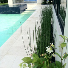 Contemporary Swimming Pools And Spas by QDI Stone - Dallas