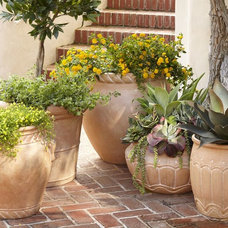 Traditional Outdoor Planters by Pottery Barn