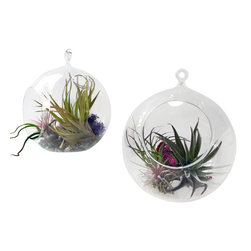 Hanging Globe Terrarium Vase/ Candleholder - These blown glass hanging terrariums make a beautiful display with Air plants , Candles or even fresh blooms.Make beautiful floating arrangements by bringing nature inside or simply creating a beautiful ambient glow with candlelight by using multiple by hanging them at various heights with rustic twine or nylon thread.