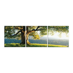 Elementem - O'er The Ridge Print - This beautiful Oak tree in the morning sunlight is printed on vinyl and mounted on a wooden MDF frame.   We laminate over each of our photos to allow them to be easily cleaned and protected.  Packed with wall hangers, they are also easy to install.