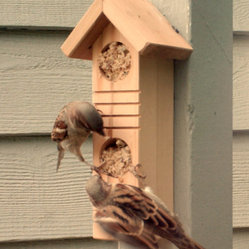 Recycled Wood Bird Feeder With Suet Plugs by Andrew