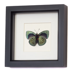 Bug Under Glass - Charles Darwin Butterfly - The exquisite blues purples and black spots that dot a real Charles Darwin butterfly are on full display in this shadowbox. Perfectly preserved and protected behind glass, this piece will delight nature enthusiasts and add beauty to your space.